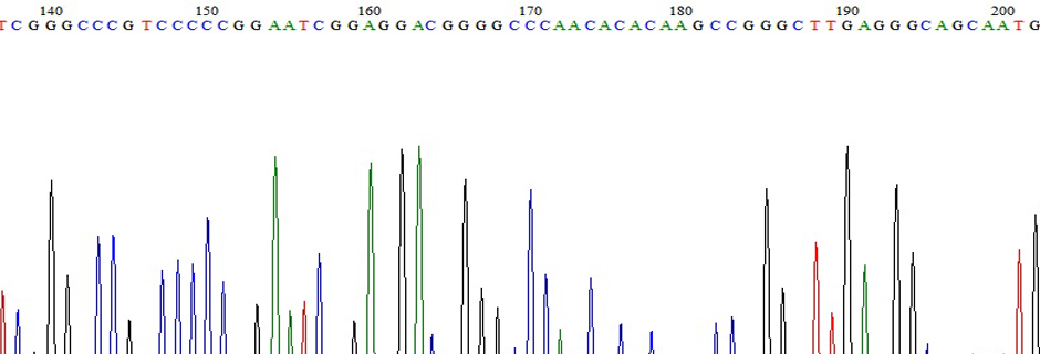 DNA Sequencing Trace